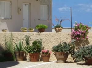 Mediterrane Pflanzen für Terrasse und Balkon